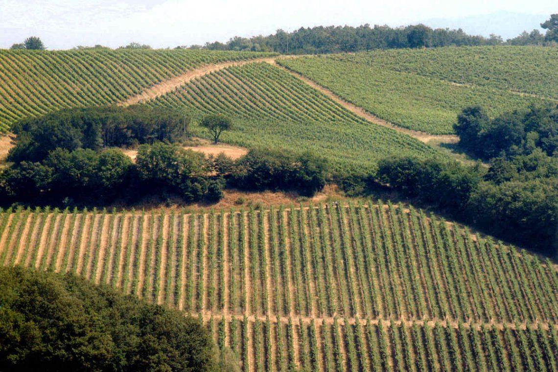 Tuscany farmhouse for sale near Montalcino 17