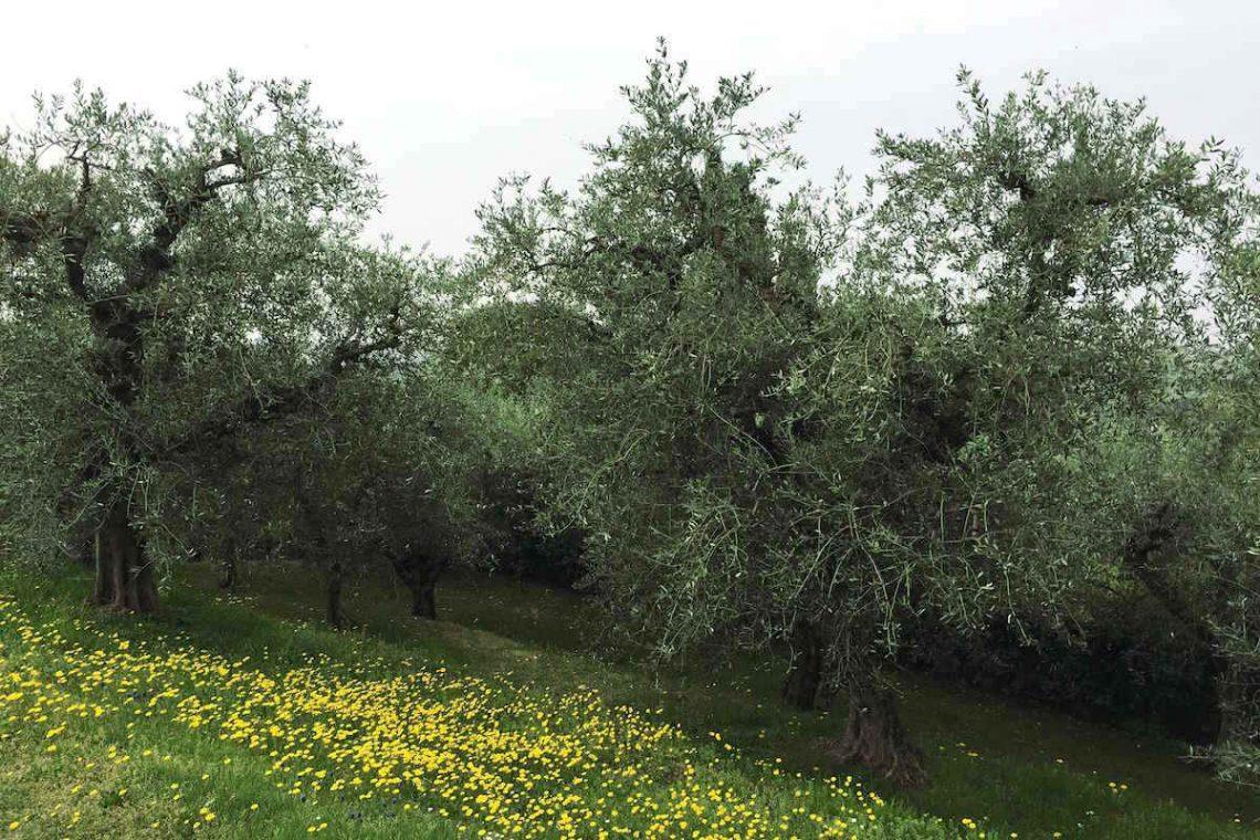 Villa Bardolino Lake Garda 36,000 sqm park & vineyards 07