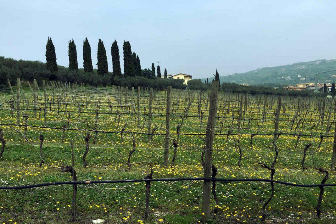 Villa Bardolino Lake Garda 36,000 sqm park & vineyards 30