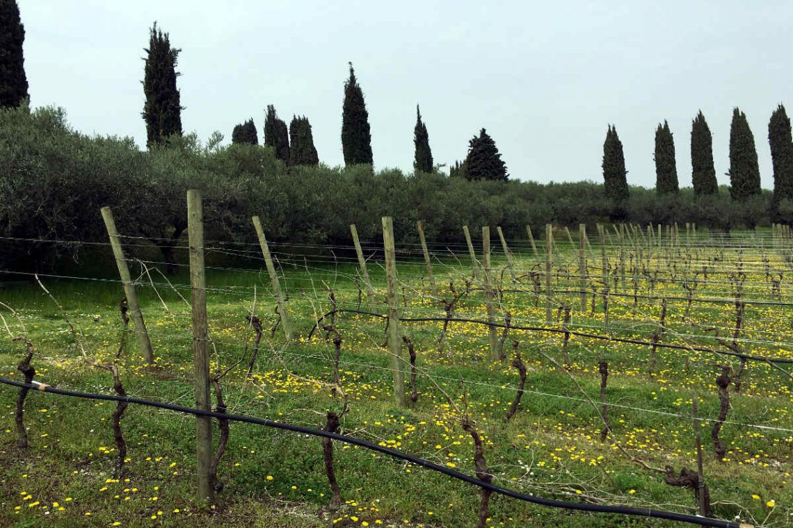 Villa Bardolino Lake Garda 36,000 sqm park & vineyards 31