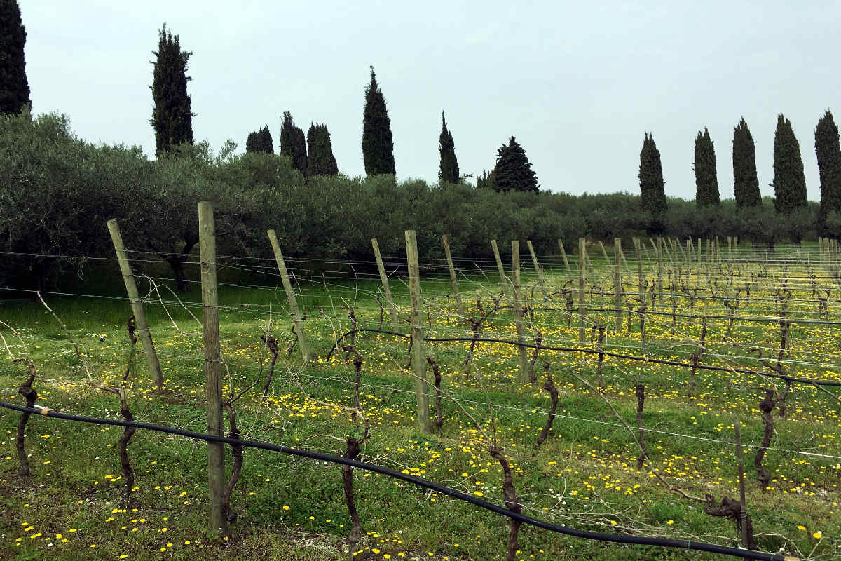 Villa Bardolino Lake Garda 36,000 sqm park & vineyards