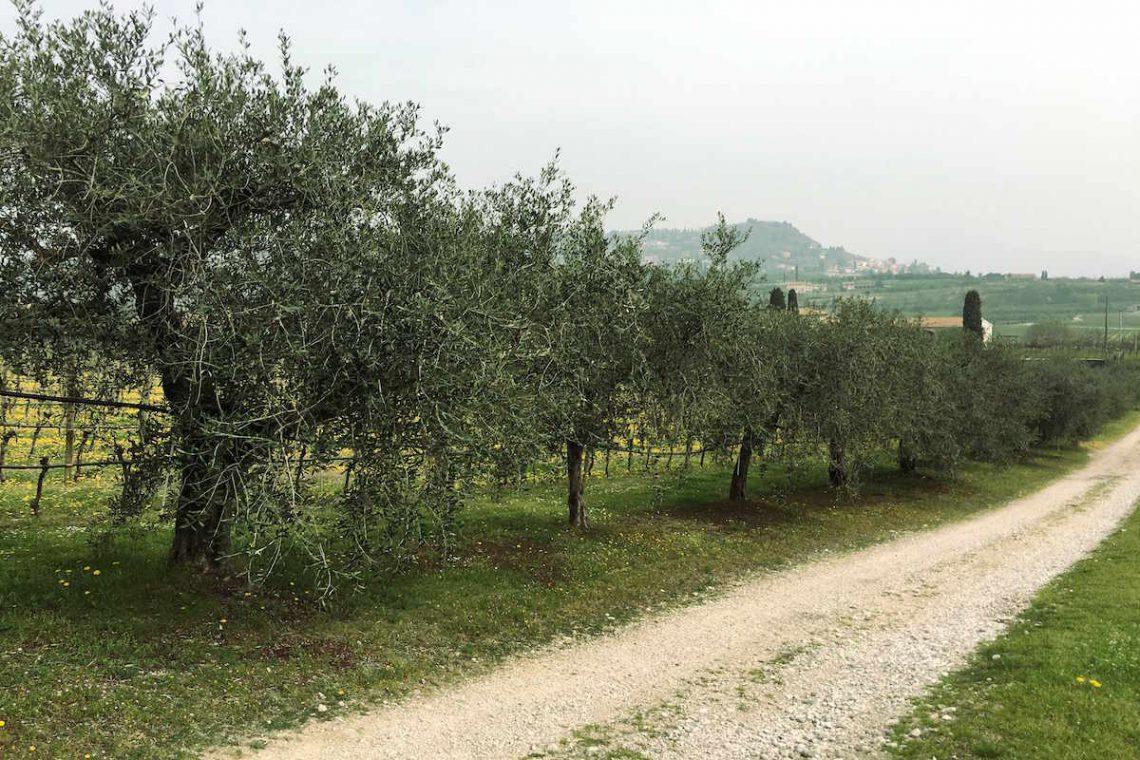 Villa Bardolino Lake Garda 36,000 sqm park & vineyards 40