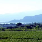 Winery Bardolino for sale with beautiful lake view
