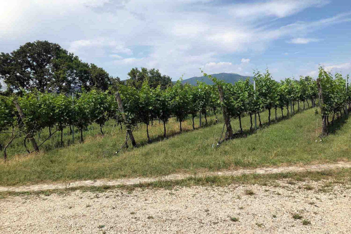 Building land Garda Lake view with approved project