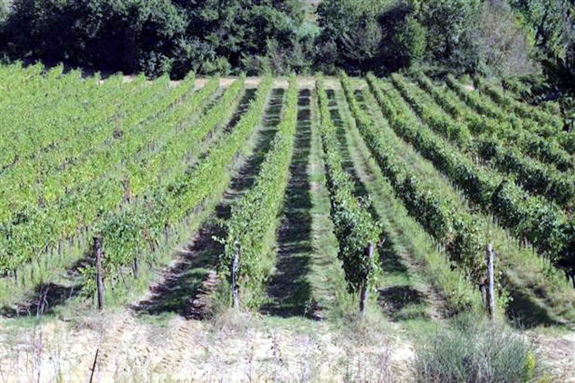 Tuscan Winery for Sale 03